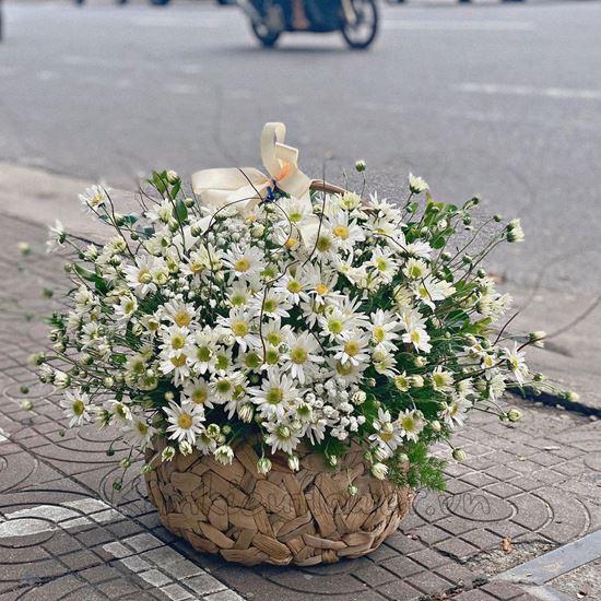 Giỏ hoa cúc họa mi -HG150